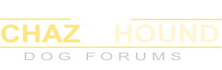 Chaz Hound - Dog Forums