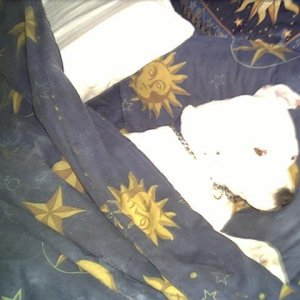 pits_in_bed_5-27-03