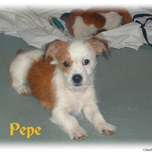 Pepe aged 3 months