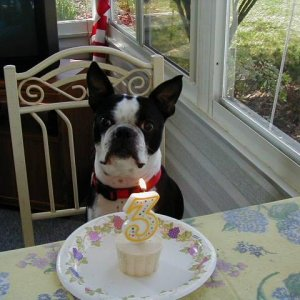 Sparky's 3rd birthday