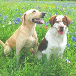 The Boys in the Bluebonnets