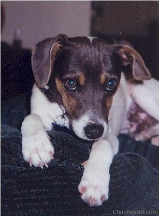 1756jackrussell8mo
