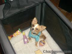 Gizmo_Jasper_Birthday_toys_and_shirt_WinCE_