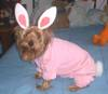2287brownie_halloween20041.jpg